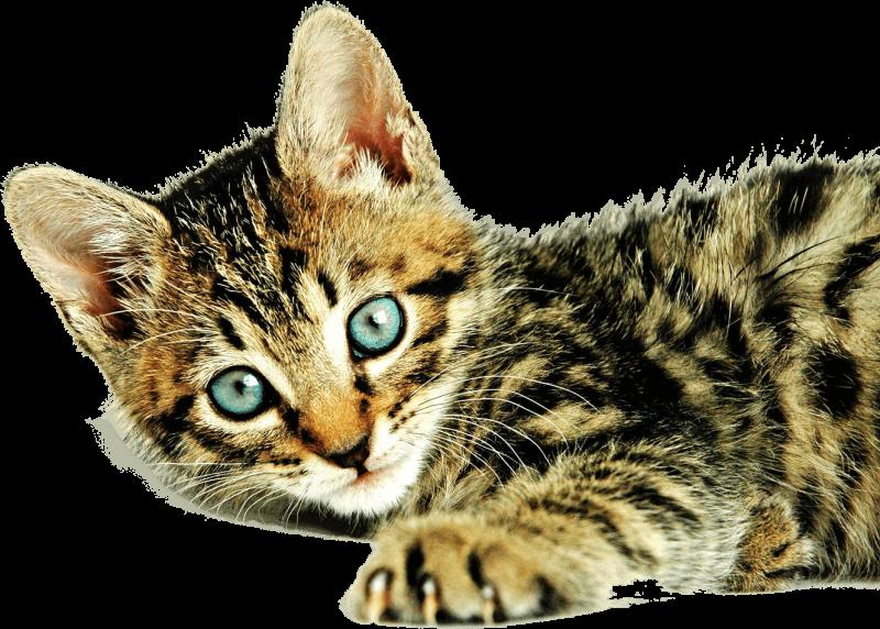 chaton visite pédiatrique